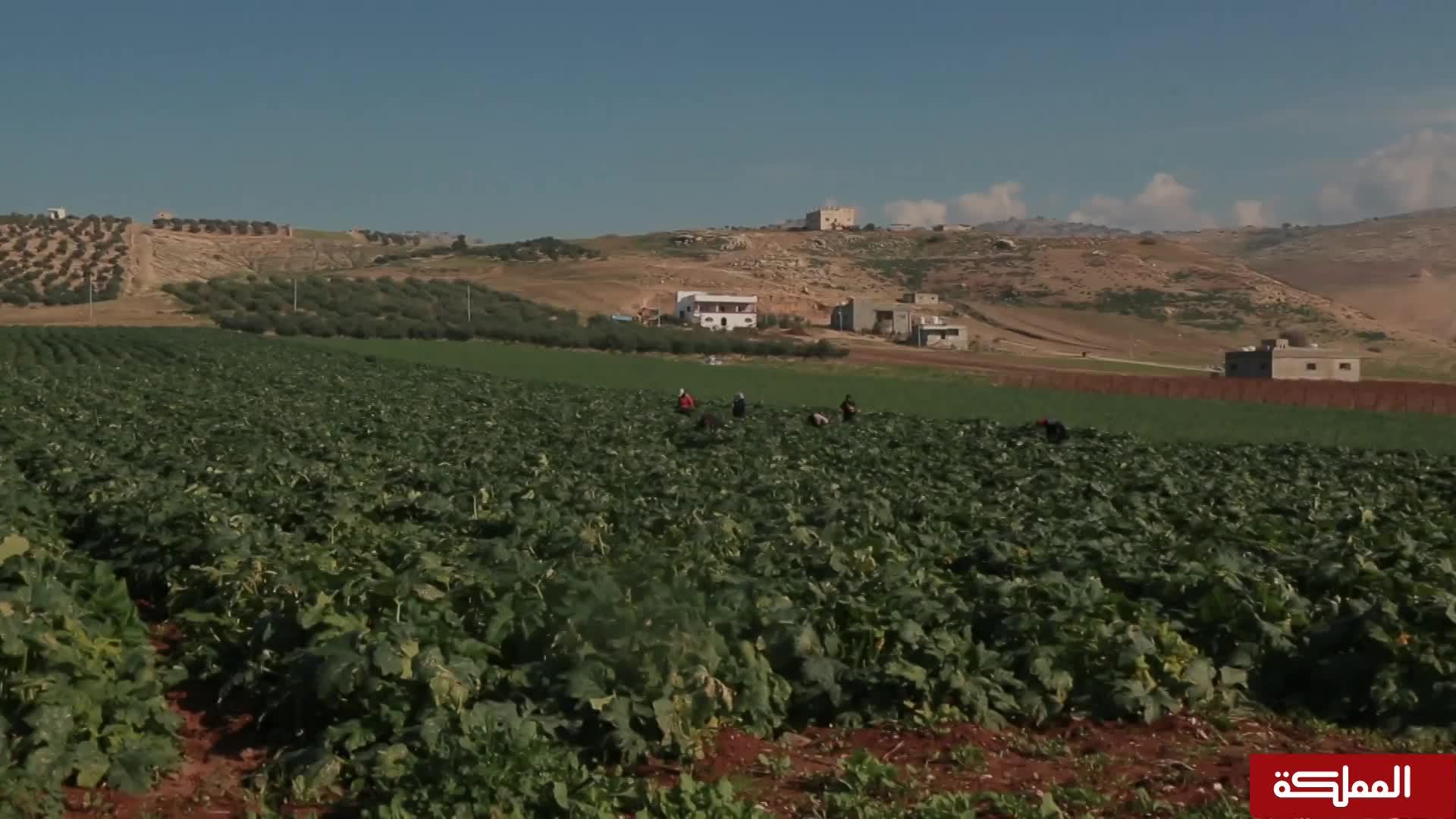 بوح القرى | قرية طبقة فحل
