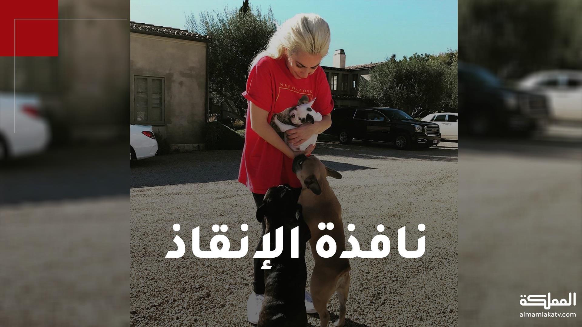 ليدي غاغا بقلب ينفطر بعد اختطاف كلبيها.. ونصف مليون دولار مكافأة من يعثر عليهما