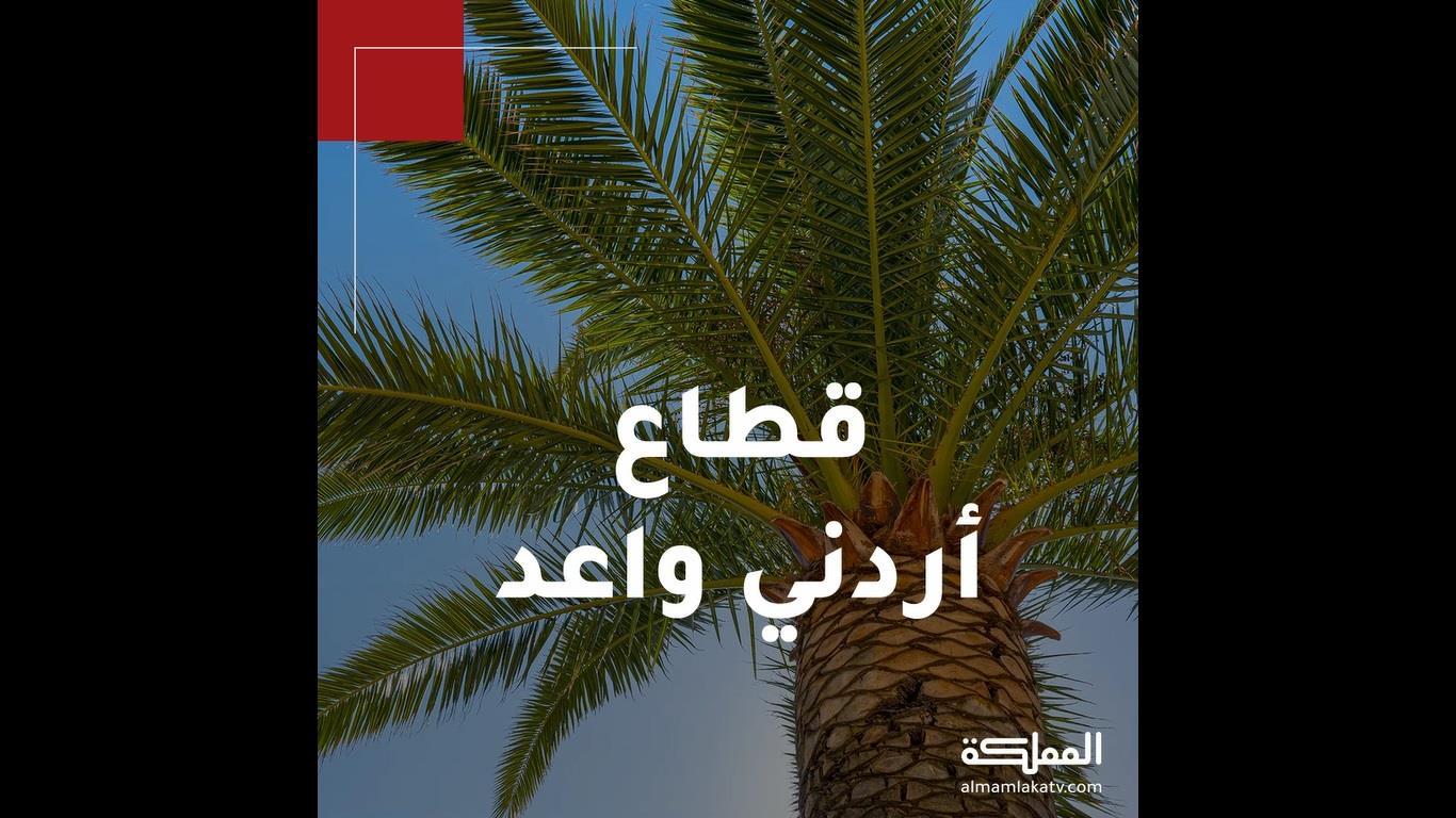35 ألف دونم المساحة المزروعة بالنخيل في الأردن، إنتاجها من التمور يصل إلى 40 ألف طن في العام